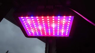 KINGBO 1000W LED Grow Light Double Chips Full Spectrum for Indoor Plants  - REVIEW