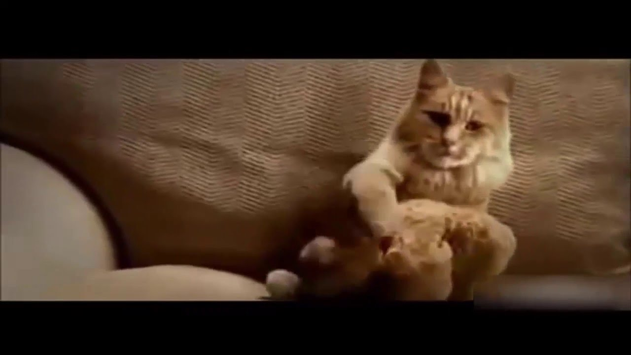 Top Funny Cat And Dog Dancing And Singing In The World Reacted Funny Videos Universe