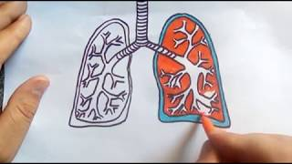 how to draw lungs,lungs diagram ,kids drawing and painting
