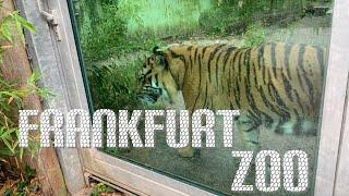 ?? Zoo Frankfurt on a rainy da…