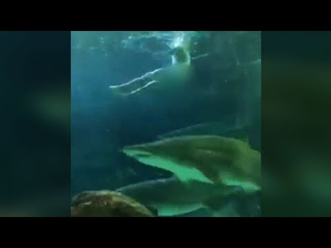 Paul Schadt and Meg - Swimming NAKED with the Sharks