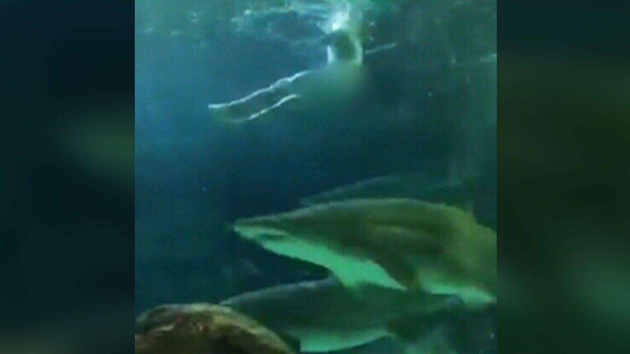 Man skinny-dips in shark tank at Toronto's Ripley's Aquarium