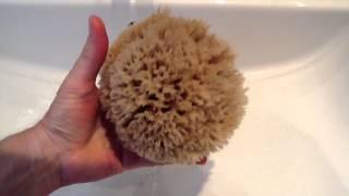 Faux Like a Pro Natural Sea Sponges