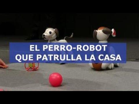 Aibo Policía, el perro-robot que patrulla la casa