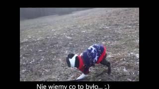 Vlog #1  - Myślęcinek,Fishboard ♥ | Nieco Inne