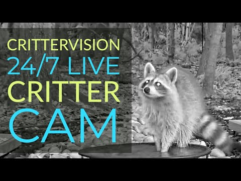crittervision-critter-cam:-24/7-live-critter,-nature-and-wildlife-viewing-cam!