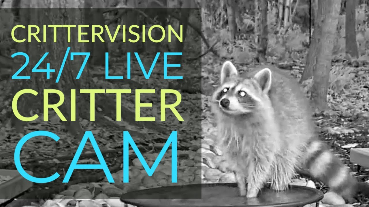 CritterVision Critter Cam: 24/7 Live Critter, Nature and Wildlife-viewing Cam!