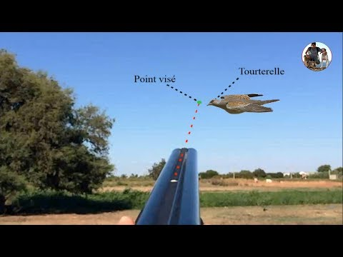Dove Hunting Best Shots With Explication Of Hunt