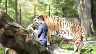 Magic Trick with Tiger