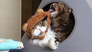 오늘은 고양이들과 성냥팔이 소녀 이야기를 패러디 해 보았어요! 어느덧...