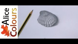 drawing a seashell in graphite