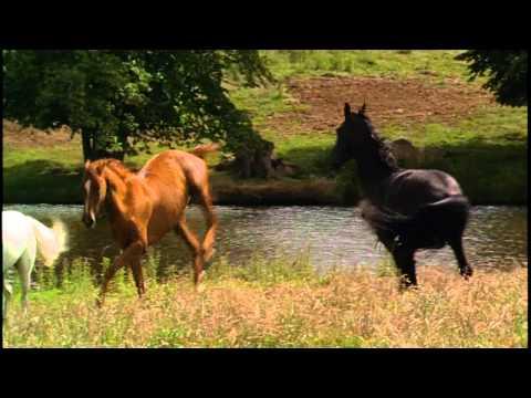 Black Beauty - Horse Whisperer Theme