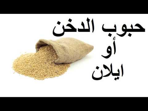 محمد الفايد - حبوب الدخن أو إيلان  - Pearl Millet