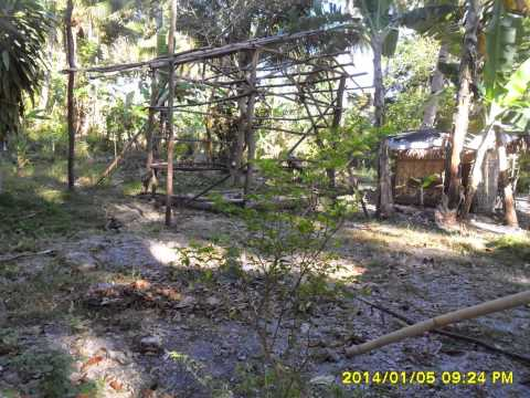 2.5 HECTARES COCONUT FARM FOR SALE LOCATED AT  SAMAL PRICE: 1,500,000.00