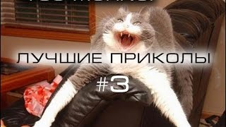 ЛУЧШИЕ ПРИКОЛЫ №3