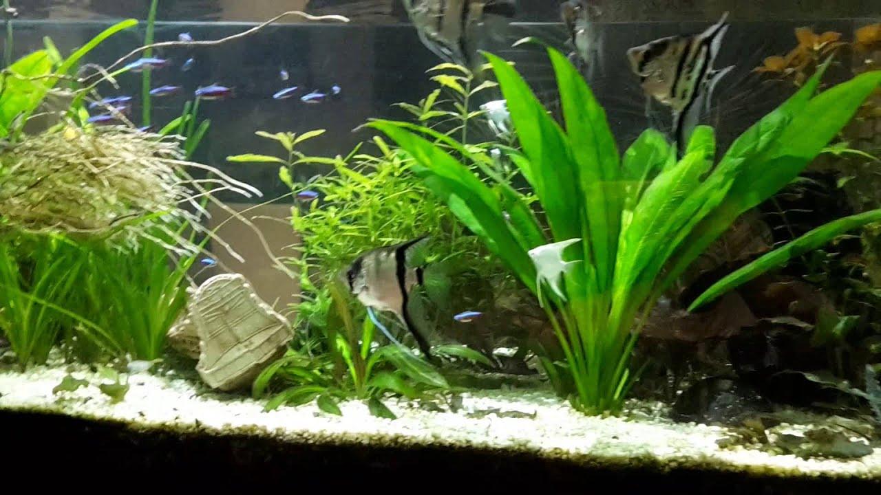 500 liter aquarium mit bio co2 youtube. Black Bedroom Furniture Sets. Home Design Ideas