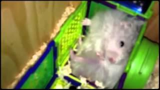 Presenting Cotton - Puff!