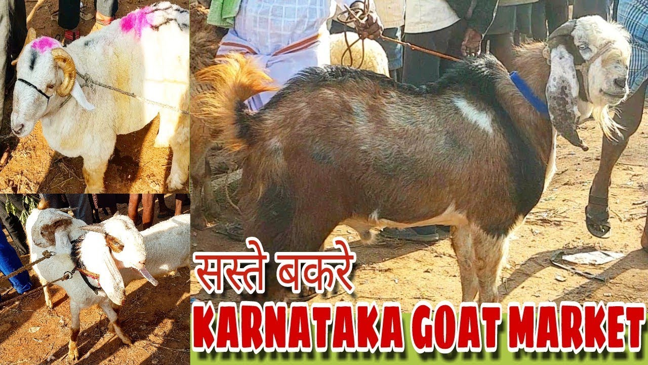 KARNATAKA GOAT MARKET (full video with price)