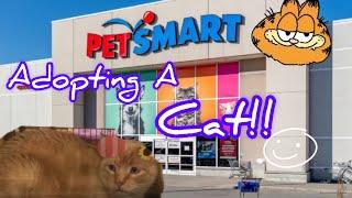 Adopting a Cat! :)) (from PetSmart)