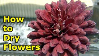 How to Dry Flowers in Semolina for crafts | Volumetric drying of flowers