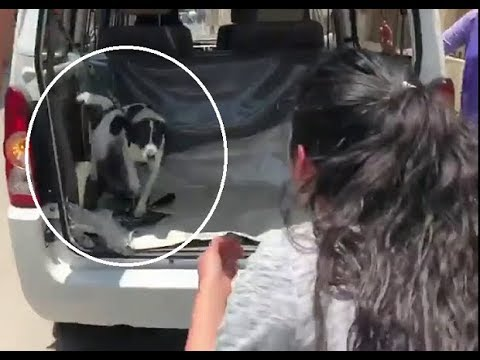 Woman Is Reunited With Lost Dog