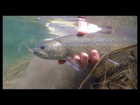 AGGRESSIVE fish in a tiny CRYSTAL CLEAR creek!