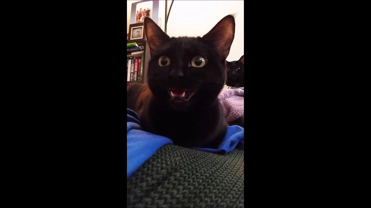 Youtube Cat Eye Tutorial: Laughing Black Cat