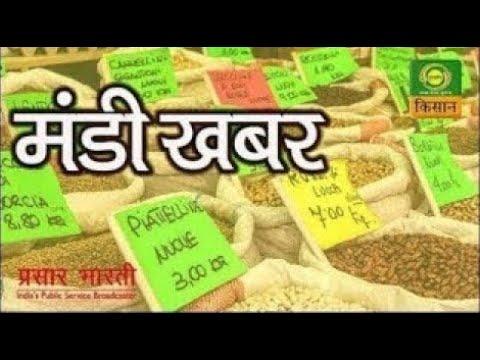 Mandi Khabar : 08 August | कैसा रहा जौ,उड़द और मूंग का बाजार