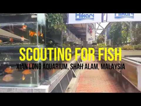 Large Aquarium Shop In Malaysia - Xian Long Aquaria