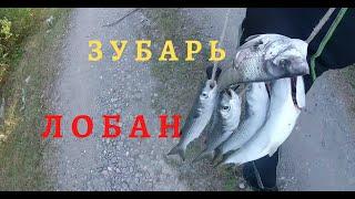 Подводная охота в абхазии Лобан и Зубарь