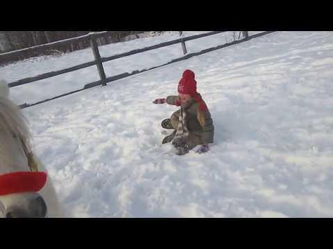 Вопрос: Как правильно падать с лошади?