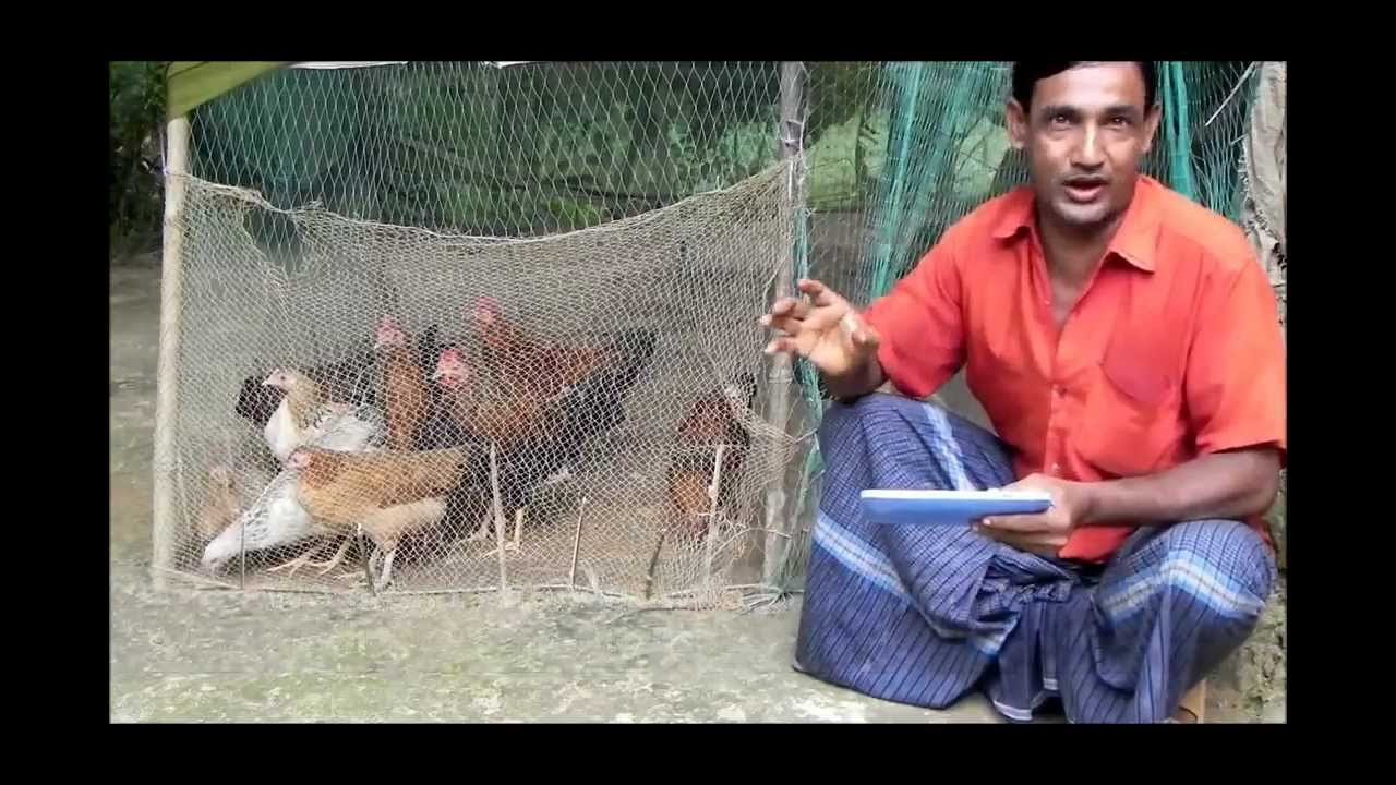 alternative income generation poultry farming youtube