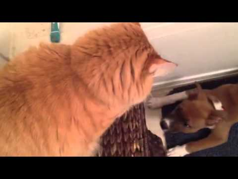 hobie cat 16 for sale