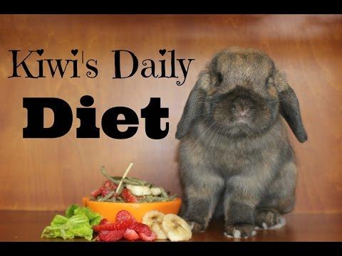 My Bunny's Daily Diet   Kiwi