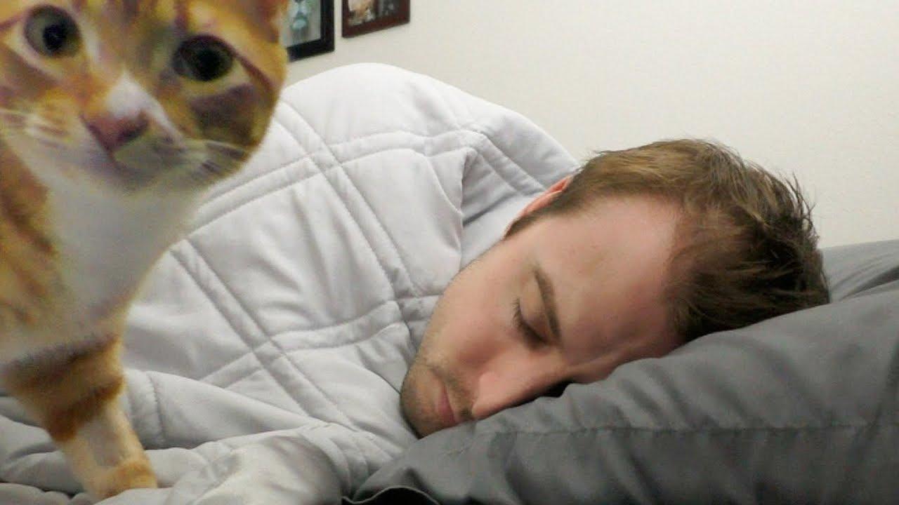 6 Common Cat Sayings Their Origins Hill S Pet