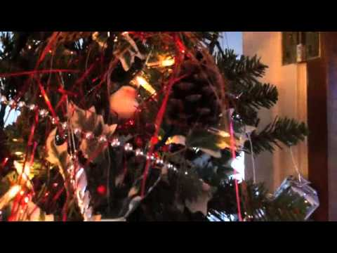 zebra finches nesting in our christmas tree decorations building nest - Christmas Zebra Decorations