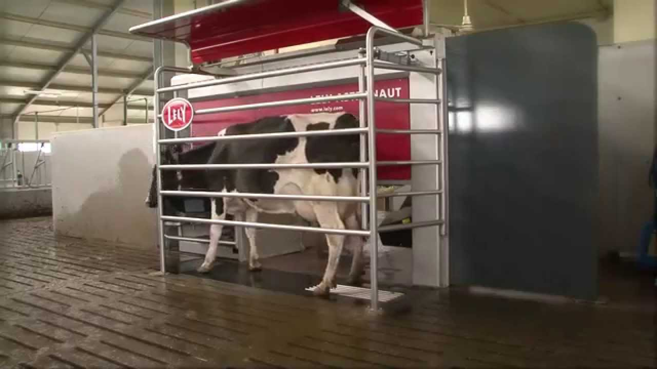 Lely Astronaut A4 - Product development (Portuguese / England)