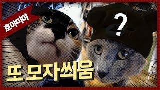 [자동&호야미야] 김도님과 국전 데이트에서 새 고양이 물품을 사왔습니다