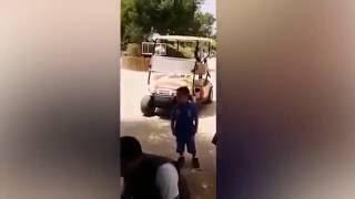 elefante de zoolgico lanza piedra y mata a nia