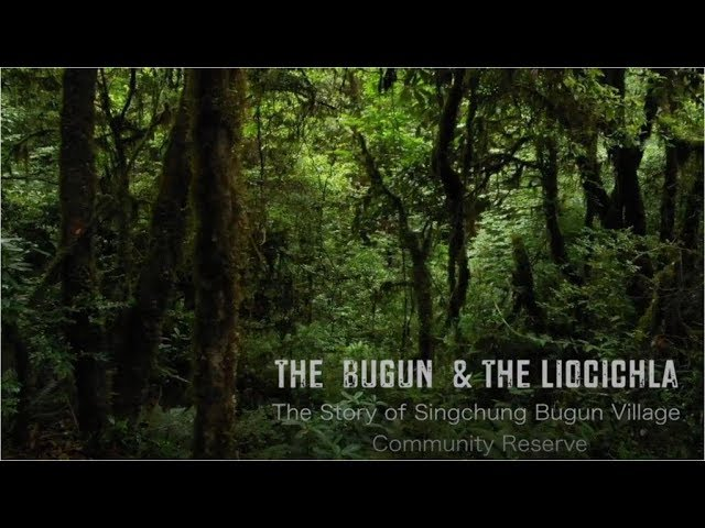 The Bugun and the Liocichlia_The Story of Singchung Village Community Reserve