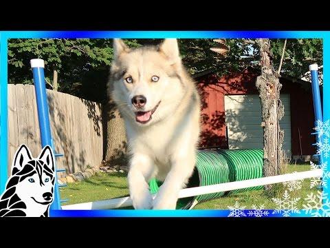 DIY DOG AGILITY JUMPS | How To Make Agility Jumps | DIY Dog Agility Course
