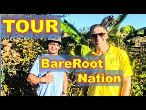 TOUR BareRoot Nation Rare & Exotic Fruit Trees    Bananas    Mangos     Citrus