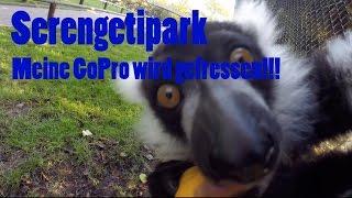 Serengetipark - meine GoPro wird aufgefressen