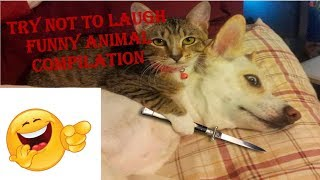 Try Not To Laugh Funny Animals Compilation   Funniest Animals  2019
