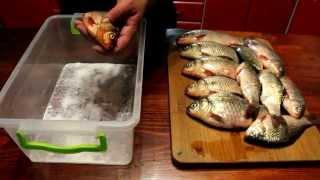 Вялим карася(Дневник рыболова)