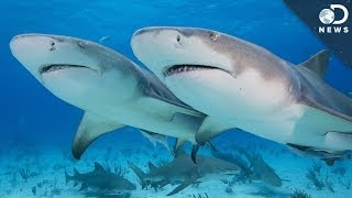 Why Are Sharks Losing Their Appetite?