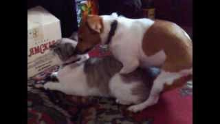 Собака девочка насилует кота.Интересно,кто родится?