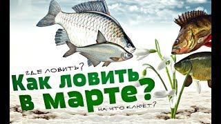 Какая рыба ловится в марте? На что ловится рыба в марте? Поведение рыбы в марте!