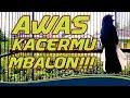 Kacer Gacor Full Isian Kacer Gacor Choe Than Magpie Robin  Mp3 - Mp4 Download