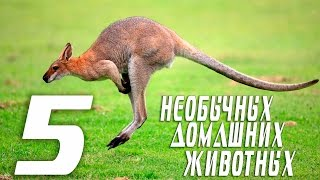 5 необычных домашних животных.